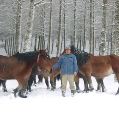 Burdi-kurutze zaldiak caballos